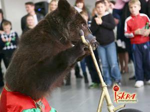 медведь на Масленицу